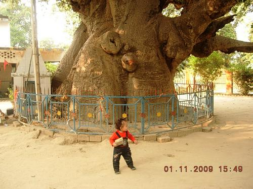 The Parijaat Tree